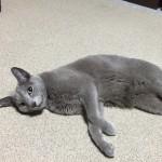 一人暮らしのペットは猫がおすすめ 癒し効果で楽しい毎日