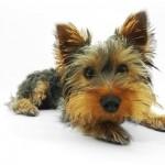 可愛い犬の写真と偉人の名言集「人生はワンチャンス!」紹介