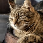 猫のかわいい写真で癒される「人生はニャンとかなる!」紹介
