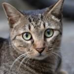 空前の猫ブーム 猫のおもしろ動画と知ってもらいたい現実